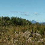 Se vende terreno de 1,7 has en Pelluco Alto - Coihuin Alto