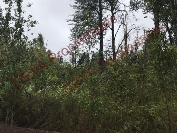 Vegetación bosques de coigues