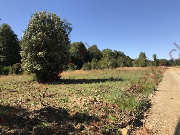 bosques de parcelas del rio maullin