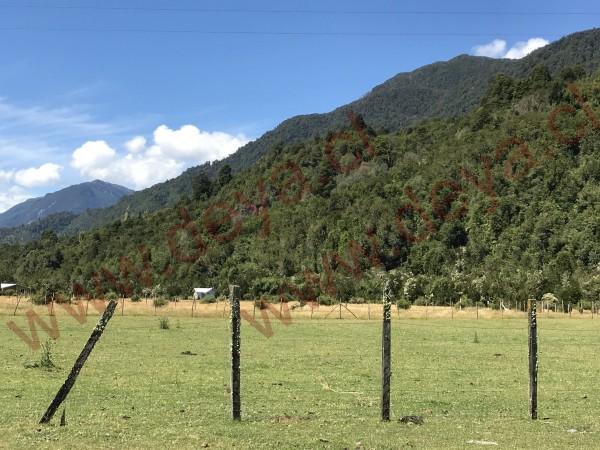 Monte de arboles