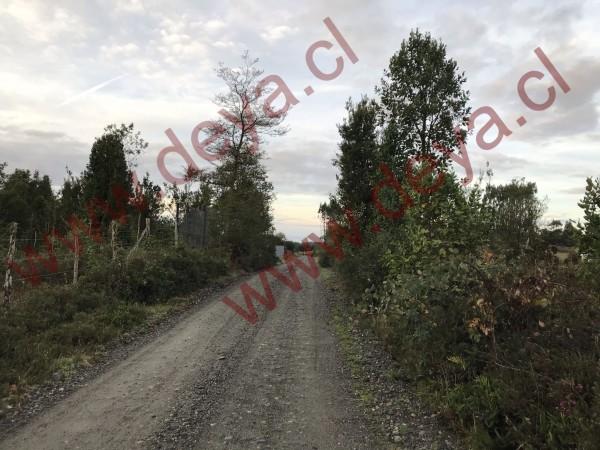 camino de acceso al terreno cerca de Calbuco