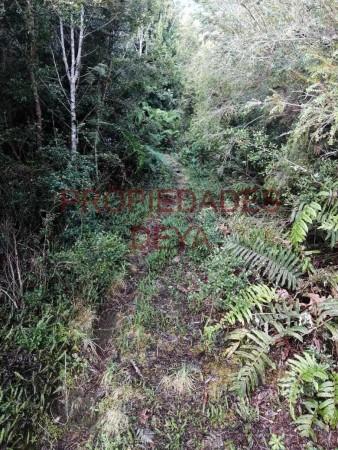 vegetacion