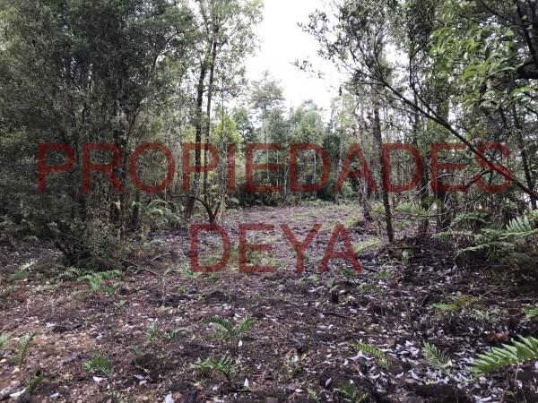 parcela en condominio monteverde